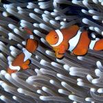 Reef Program Making a Splash with Schools