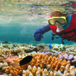 QLD Education Experiences - Great Barrier Reef Trip